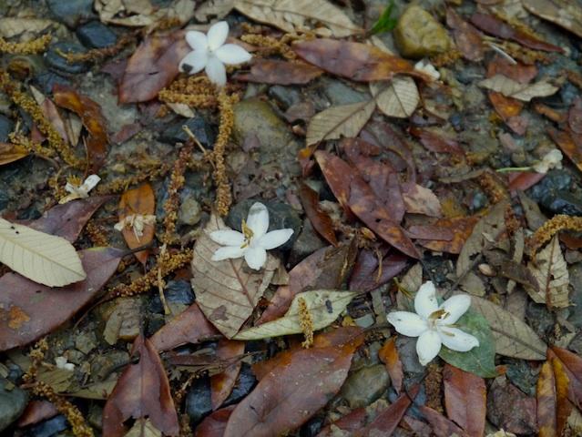 落ち葉の花