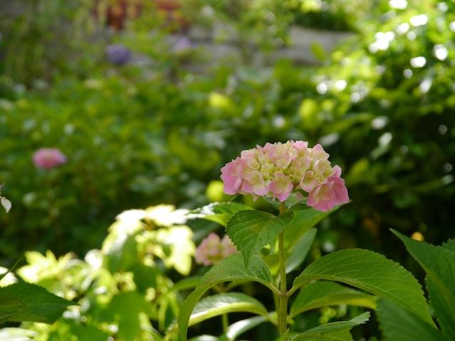 ヒカリの中に咲く2