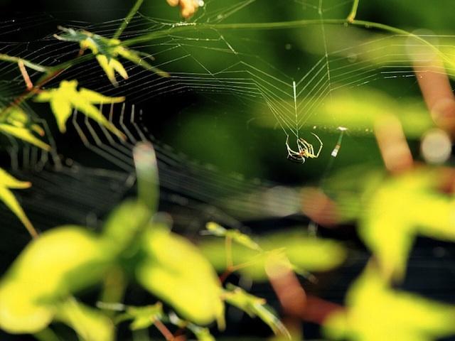 蜘蛛の糸 TS