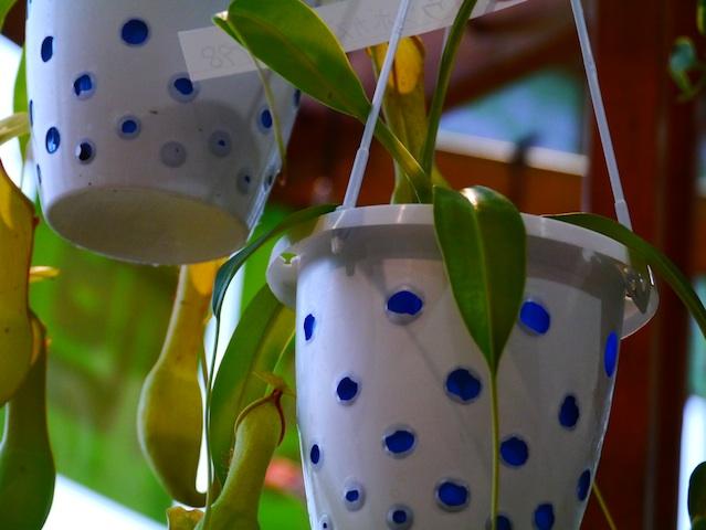 水玉釣り鉢1