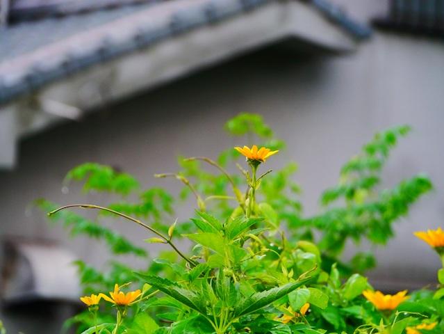 黄色の花4