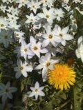 道で見つけた花1