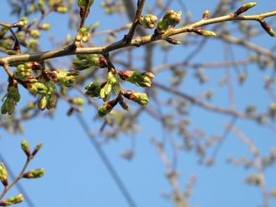 2012-03-29_16-59-29-2.jpg