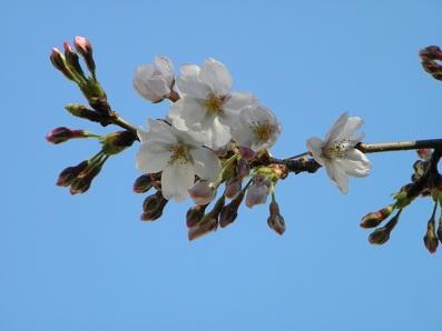 2012-04-04_15-46-43-2.jpg