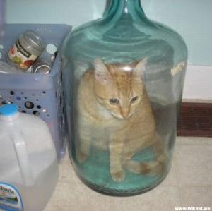 2008515_12165813425_1-cat-in-bottle.jpg