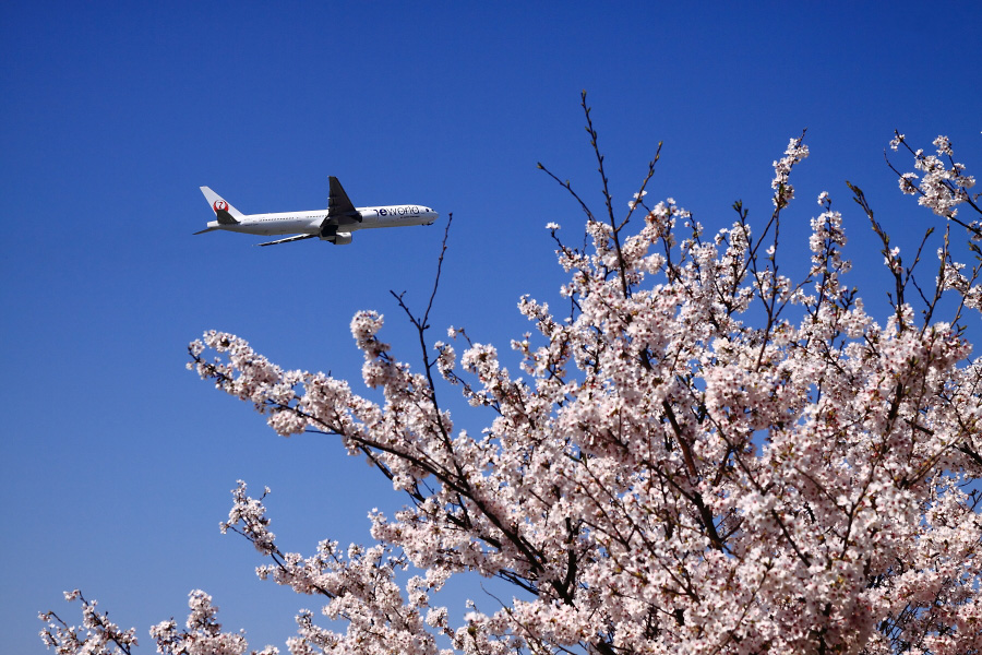 JAL B777-346 JAL2081@下河原緑地(by EOS 50D with SIGMA 18-50mm F2.8 EX DC MACRO)