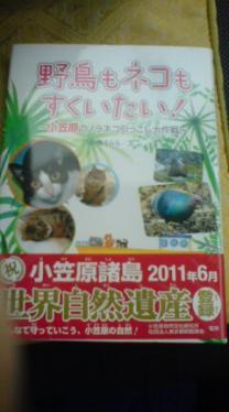 小笠原の野猫