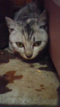 美猫わさび