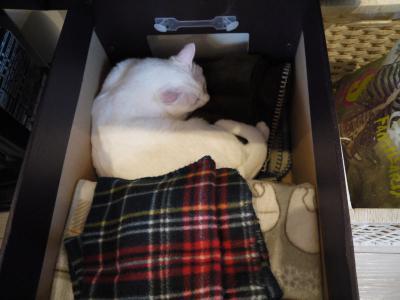 nuko-mahi 猫とひざ掛け