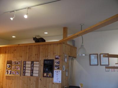 nuko-mahi 猫部屋