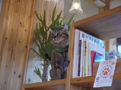nuko-mahi 本棚と猫