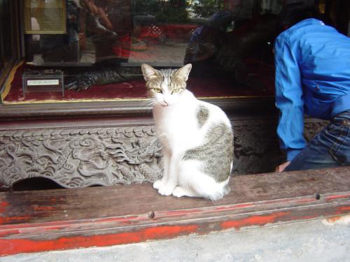 玉山神社の猫