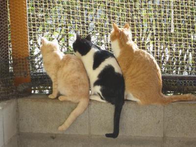 ネコハウスの3匹