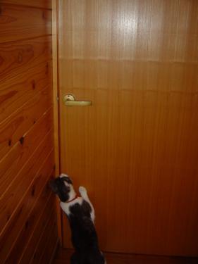 さわちゃんの部屋の戸を開けるてんてん