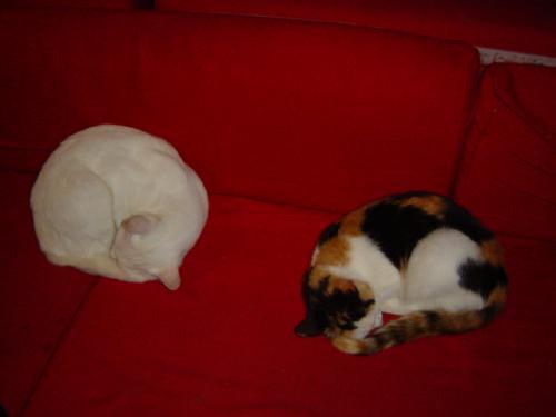 猫カフェ 1階