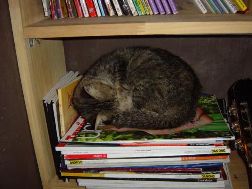 猫カフェ 3階