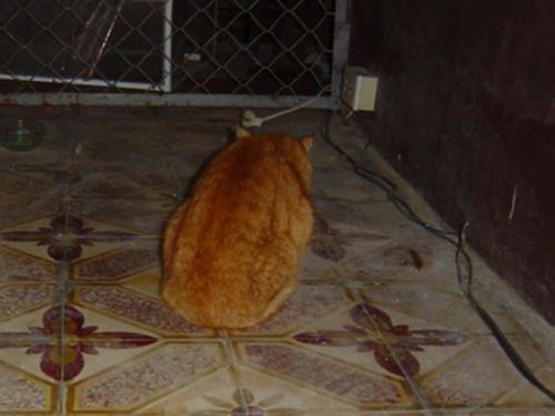 猫カフェ ベランダ