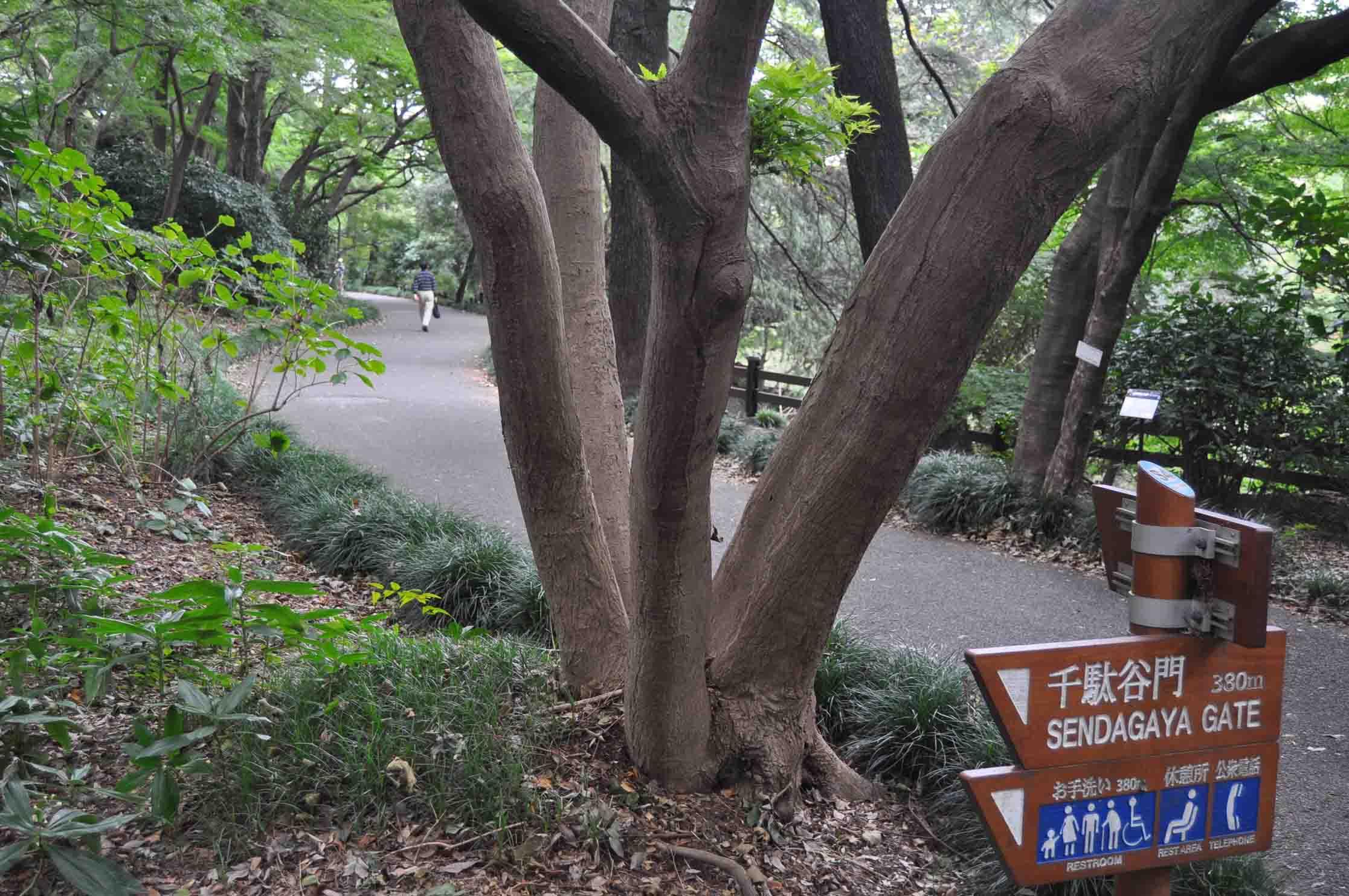 DSC_2071新宿御苑11