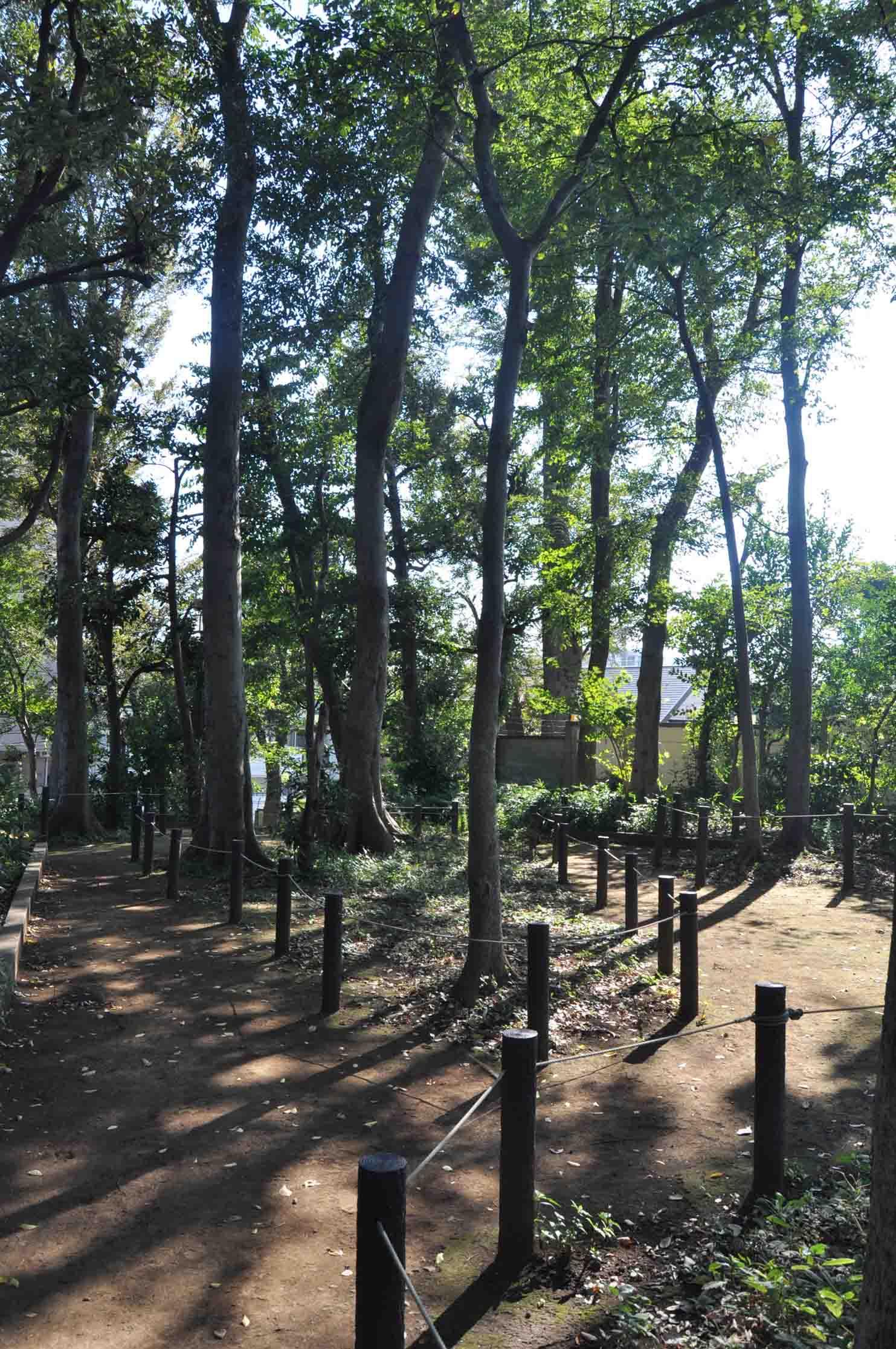 DSC_2217岡田の森