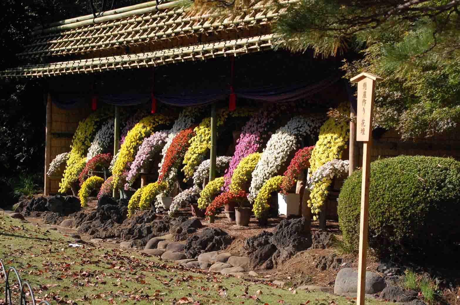 201111116新宿御苑 037A