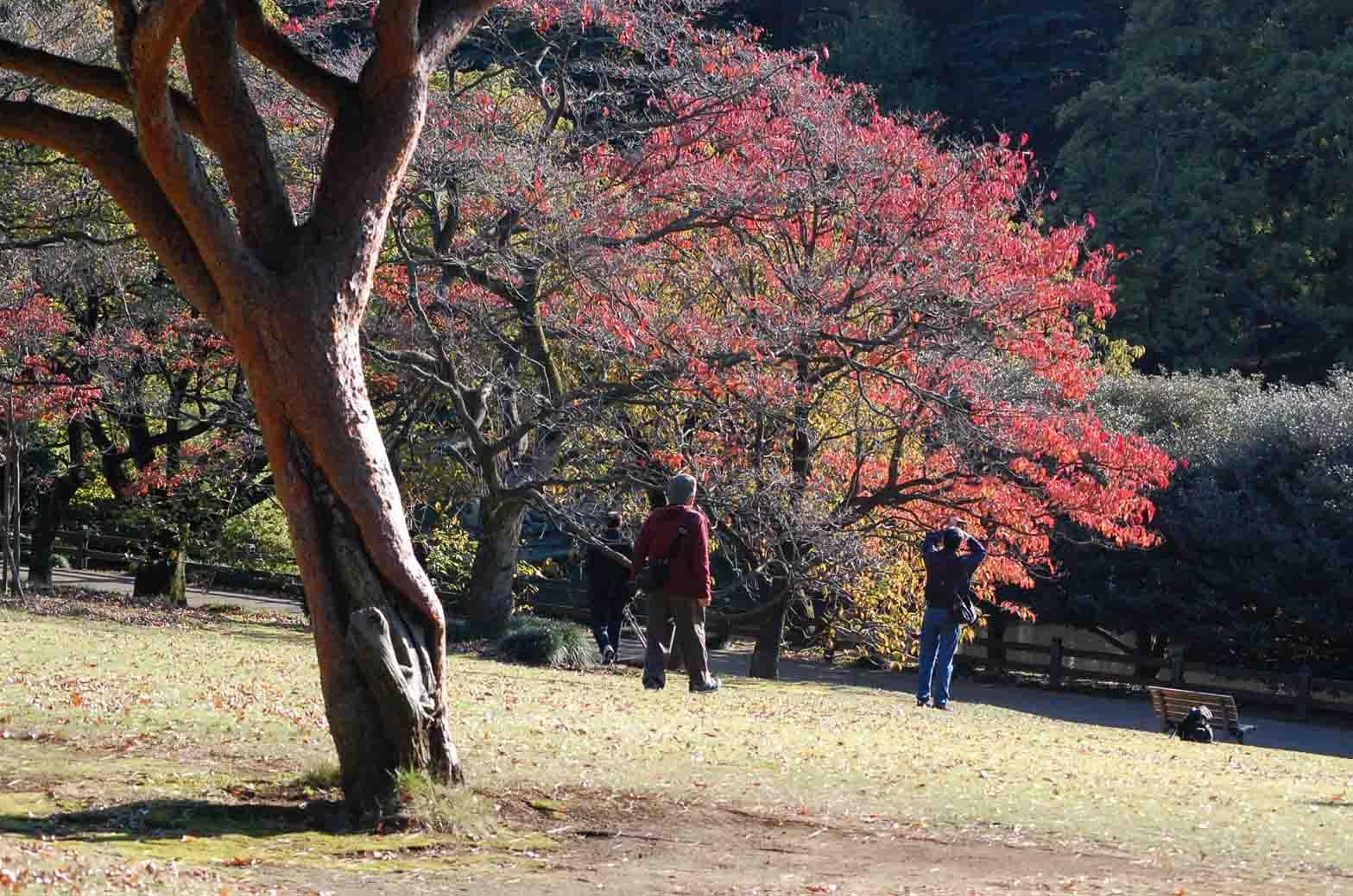 201111116新宿御苑 109A