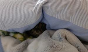 毛布こっちゃん2