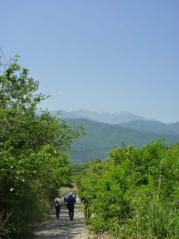 新緑と鳳凰三山