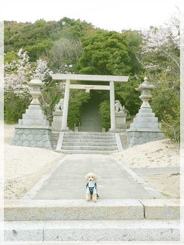 小夏と神社