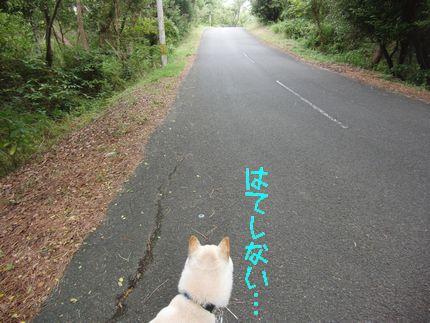 20111001 遊歩道02