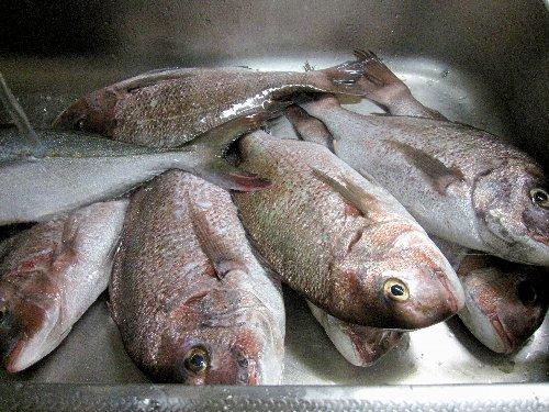 2011・08・20大漁1