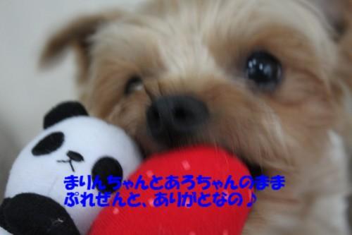 IMG_3467.jpg