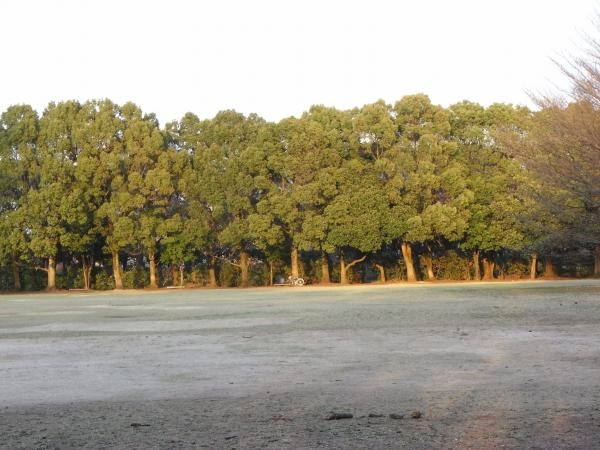 4:23公園樹木縮小…¬åœ'イメージ_convert_20120423212259