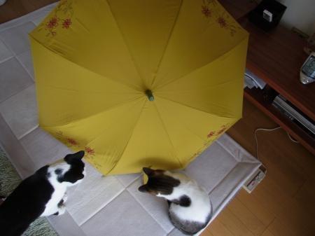 日焼け傘縮小