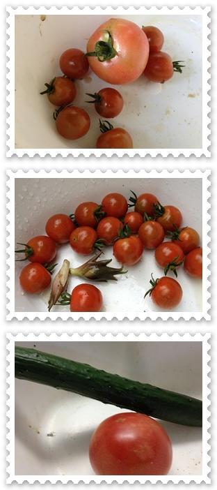 7月6日収穫