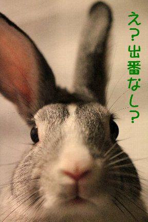IMG_2165moji-kiss.jpg