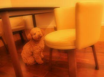 ポチオと椅子