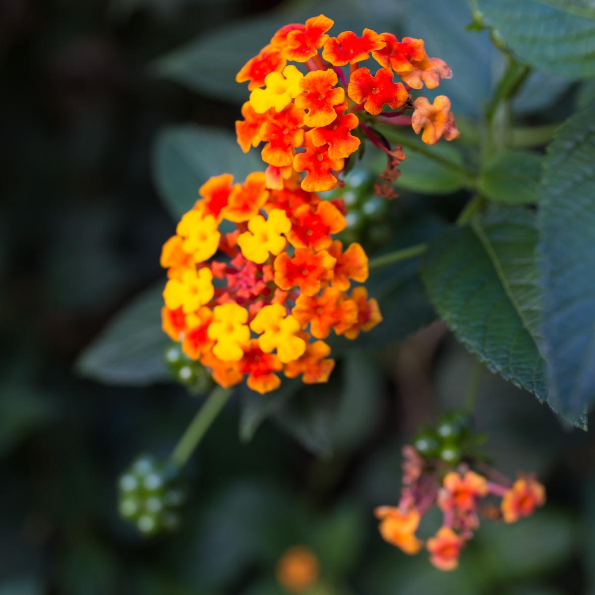 秋の風景(6)