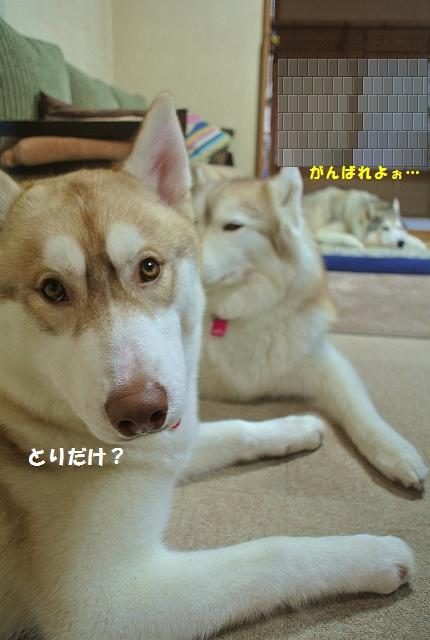 DSC_6087.jpg