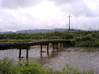 田原の流れ橋2