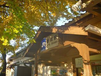 JR奈良線 新田駅の大銀杏  (2)