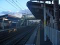 JR奈良線 新田駅の大銀杏  (11)