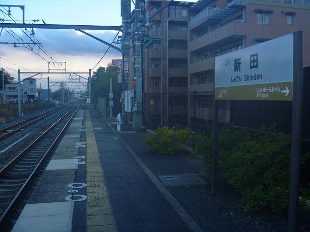 JR奈良線 新田駅の大銀杏  (13)
