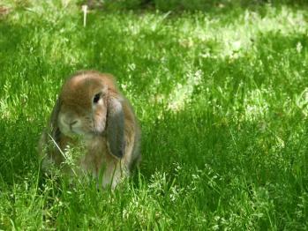 ウサギ 明石公園