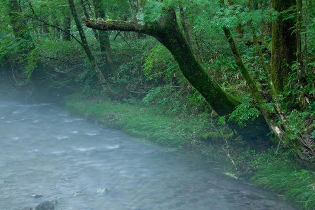 男池湧水群1