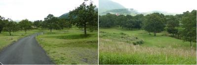 20110919山鳥の森キャンプ (8)