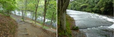 20110919山鳥の森キャンプ (13)