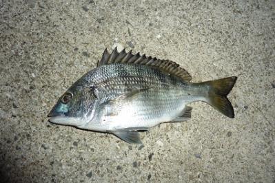 20111002メイタ釣り (5)