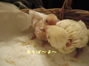動画 177