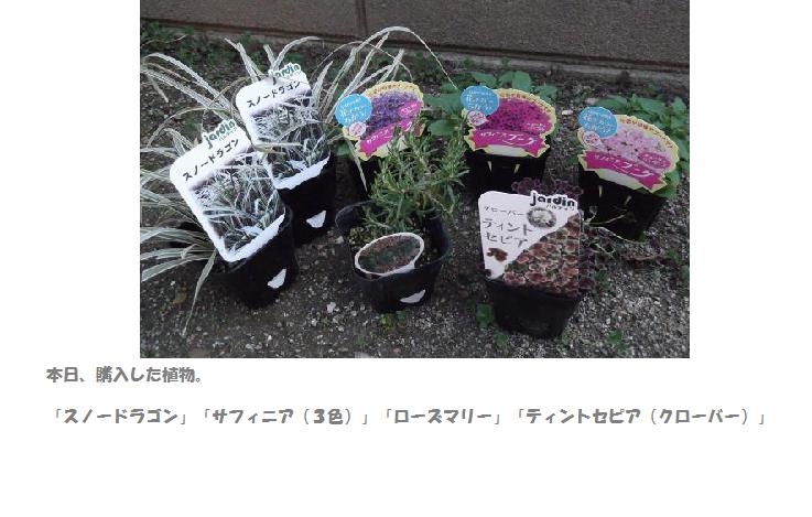 2012年3月29日買った植物文章入り