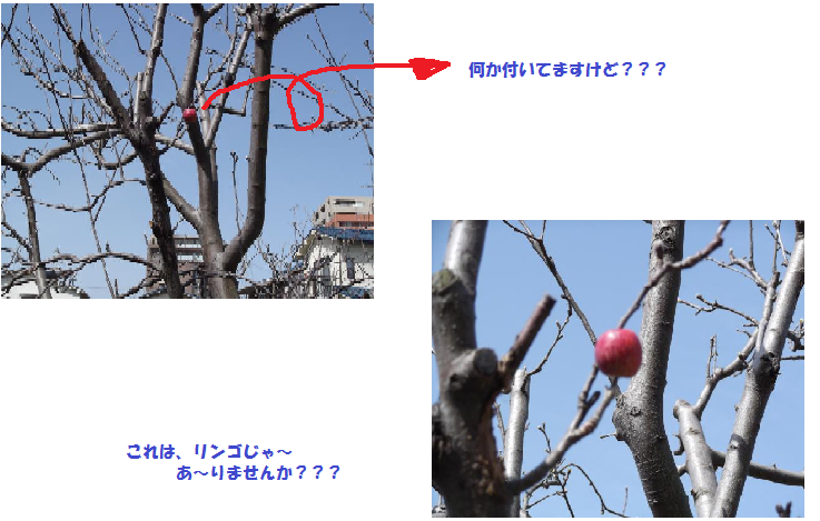 リンゴの木②
